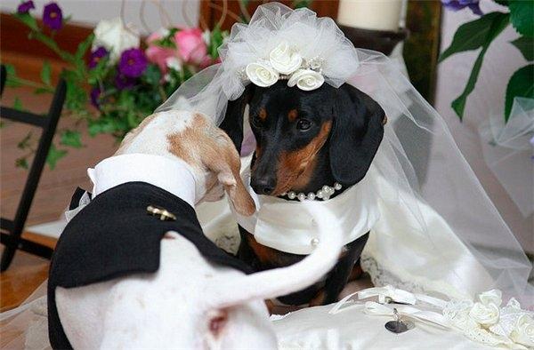 Сколько длятся собачьи свадьбы