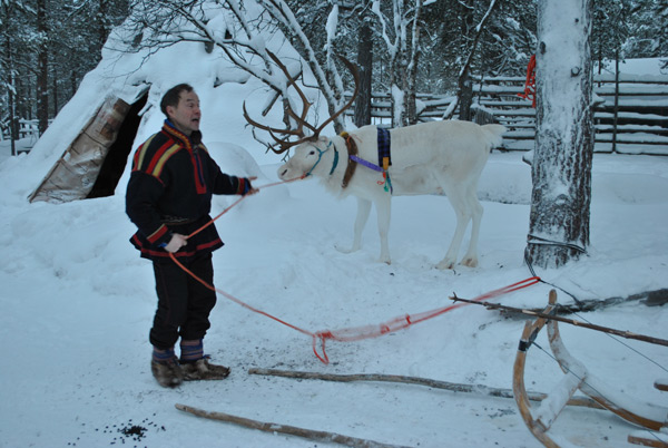 На фото: Саам Тинто запрягает своего любимого белого оленя подле заснеженного чума