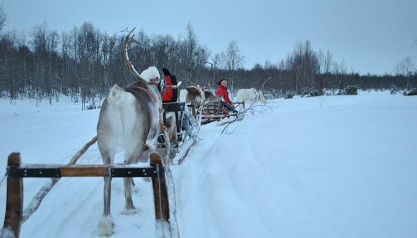 На фото: Наш санный поезд к Деду Морозу
