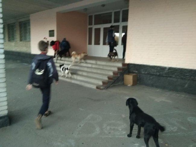 Животные чувствуют себя хозяевами на школьном дворе
