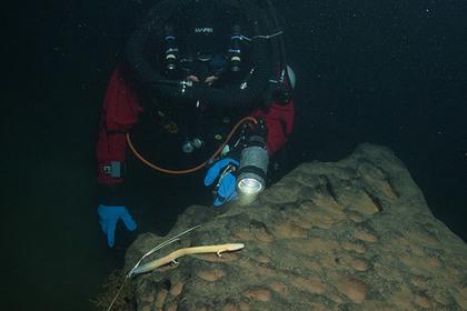 Нарекордной глубине ученые отыскали «человеческую рыбу»