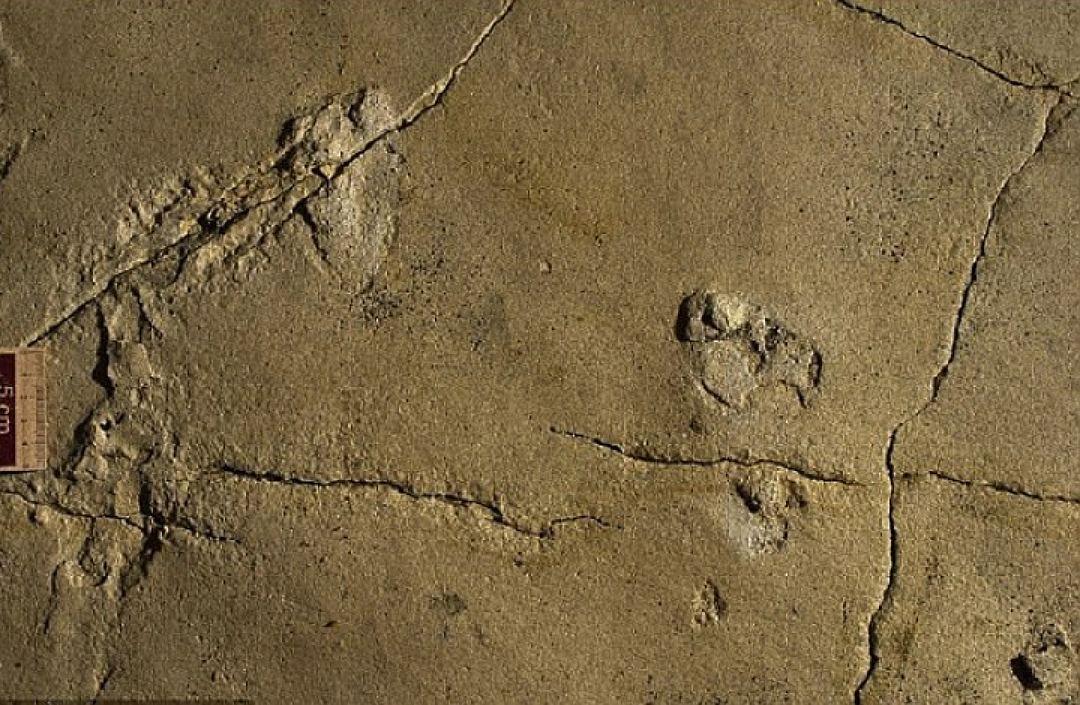 ВГреции отыскали окаменелые человеческие следы возрастом 5,7 млн лет