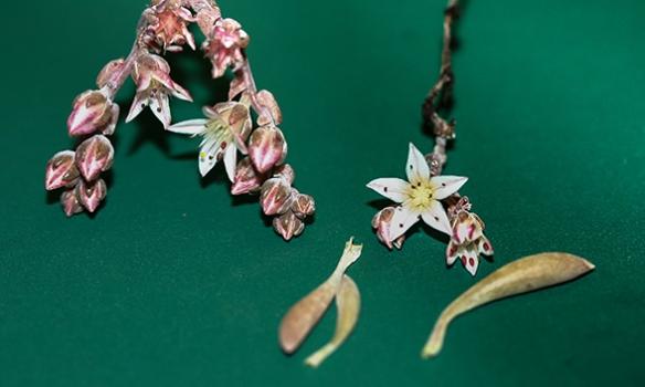 Ученые назвали новое растение вчесть Джими Хендрикса