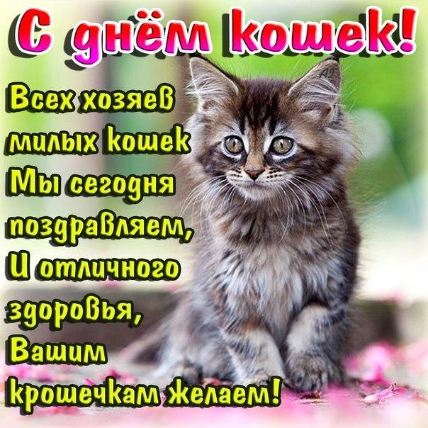 Всемирный день кошек открытка, днем рождения руслана