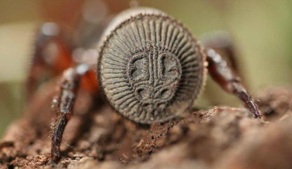 Китайский фермер наткнулся на необычайного паука, который внешне напоминает старинную печать