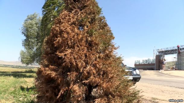 Встолице Кыргызстана покрасили деревья ксаммиту СНГ