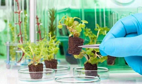 Растения-шпионы: безупречные лазутчики наближайшем газоне