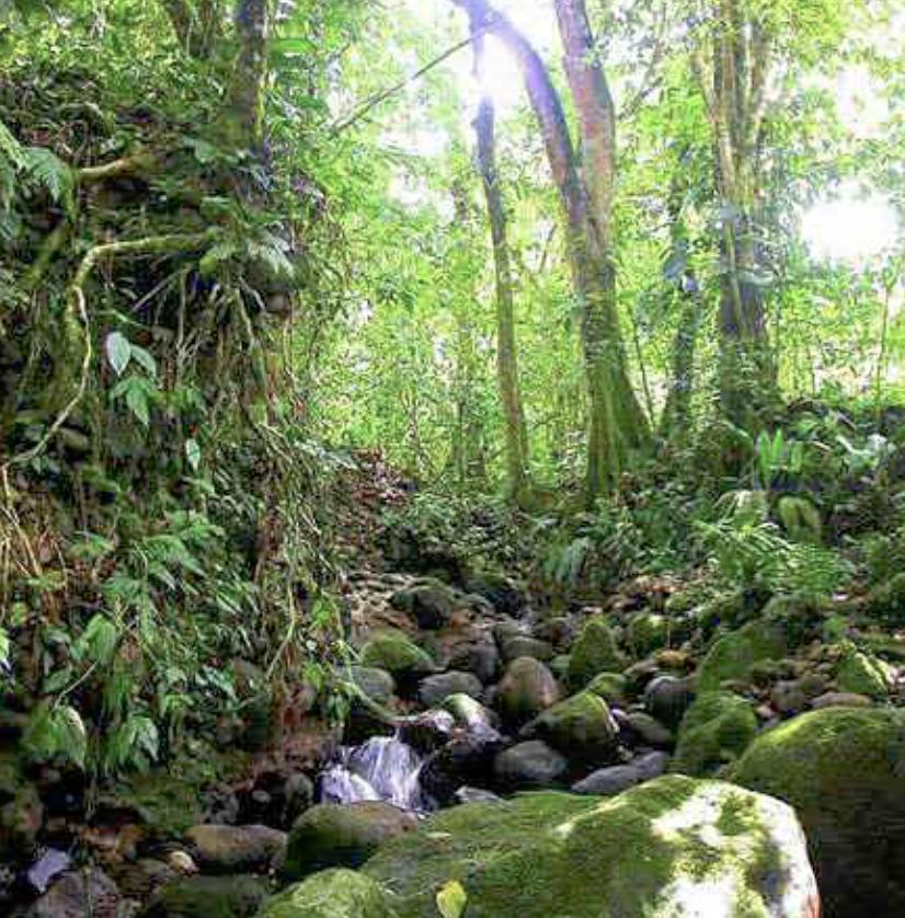 Сельва - непроходимые джунгли Амазонии