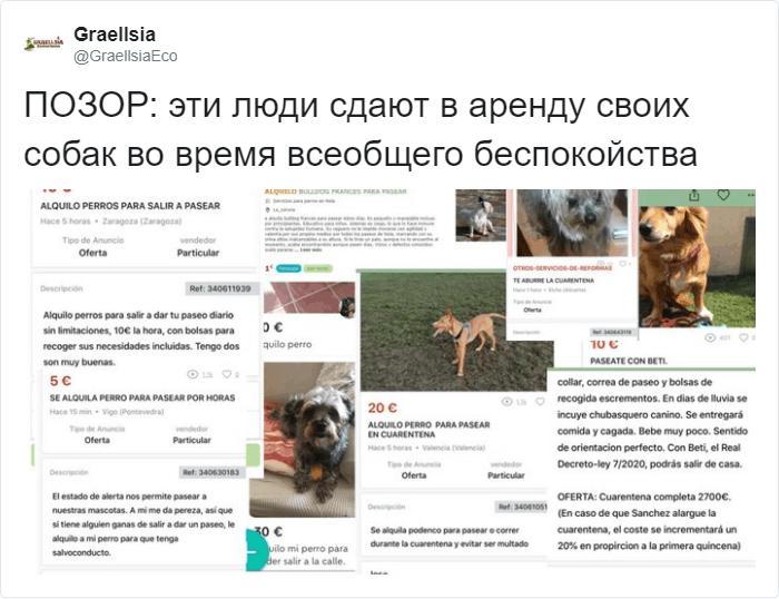 В Испании владельцы собак сдают любимцев в аренду, чтобы помочь другим людям погулять