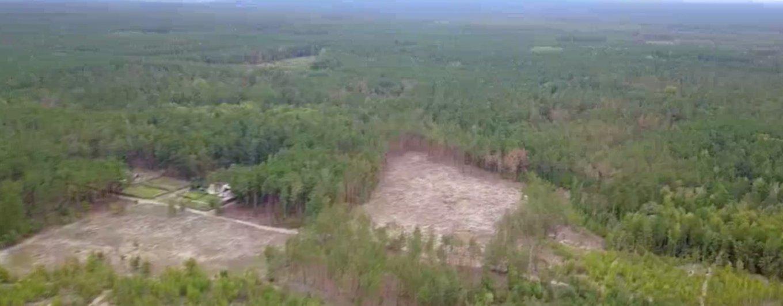 Вырубленные площади леса Пущи-Водицы не засаживают молодыми деревьями