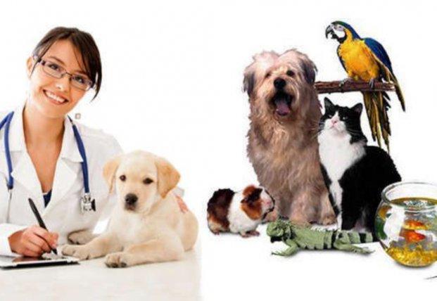 Международный день ветеринарного врача (World Veterinary Day)