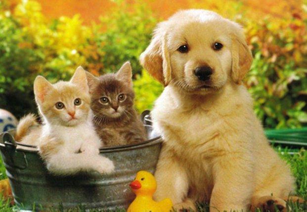 Всемирный день домашних животных (World Pets Day)