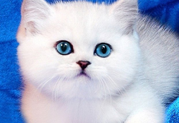 Всемирный День кошек и котов