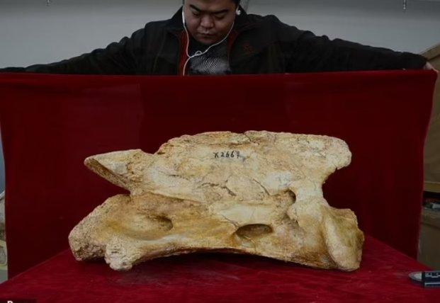 В Китае нашли останки предка носорога: гигант жил 26 миллионов лет назад