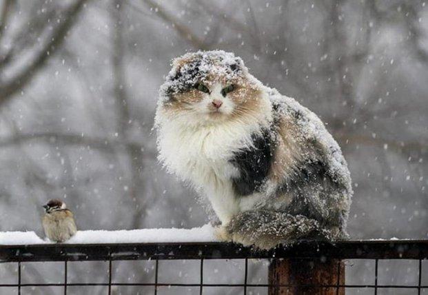 Прогноз погоды на декабрь: синоптики шокировали украинцев
