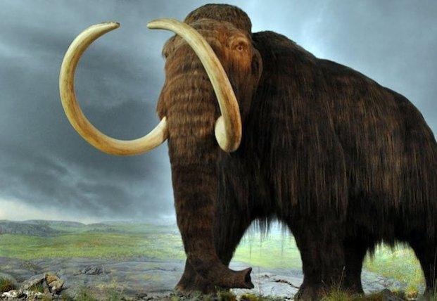 Ученые рассказали почему исчезли мамонты