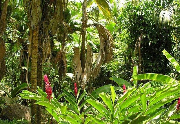 Картинки по запросу влажные экваториальные леса