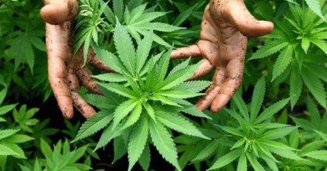 Курить марихуану видео жданов марихуану
