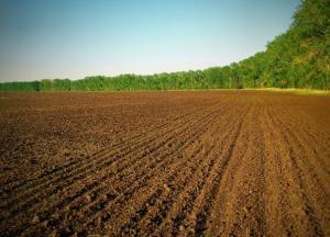 Может ли минстрой выкупить муниципальную землю находящуюся в бессрочной аренде