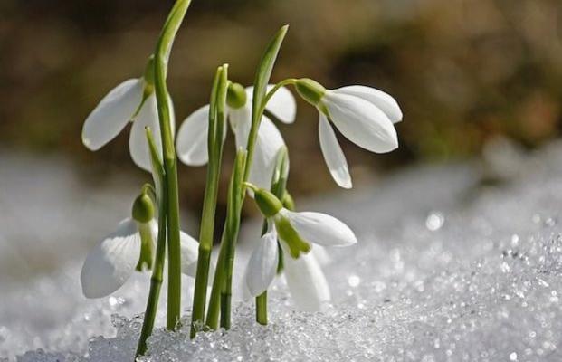 С надеждами на тепло: синоптики рассказали, какой будет весна